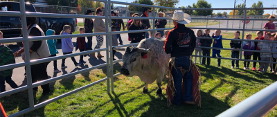 Miniature bull visits Farr West Elementary