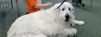 Therapy Dog 'Flocki' thrills Canyon View Students on weekly visits to the school